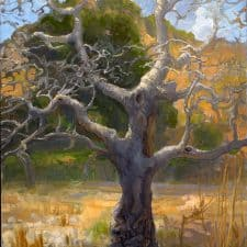 """American Legacy Fine Arts presents """"Bare Branches; Malibu Creek State Park"""" a painting by Peter Adams."""