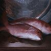 """American Legacy Fine Arts presents """"Red Snapper"""" a painting by Adrian Gottlieb."""